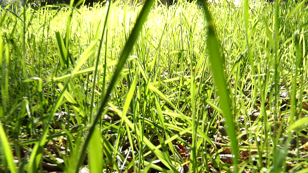 track_moving_grass-1436